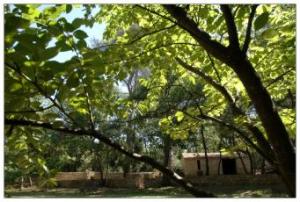 Domaine du Bois Vert, Grans-Provence